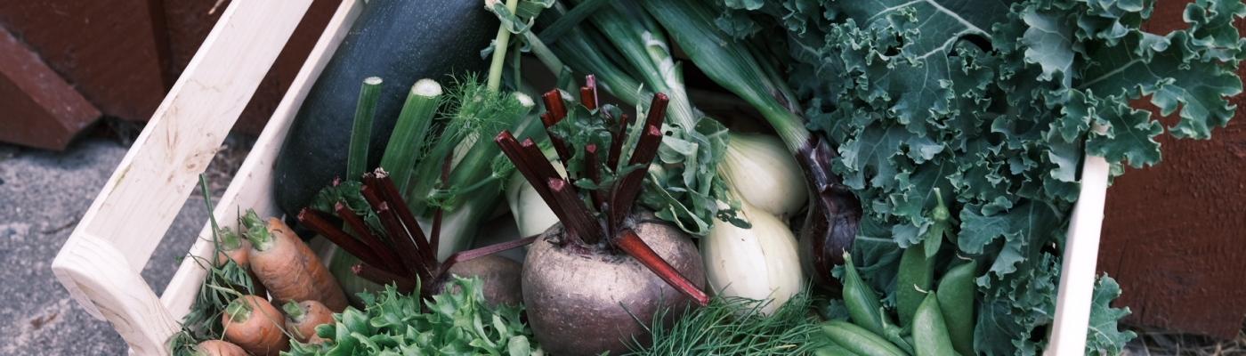 grønnsakskasser dype røtter