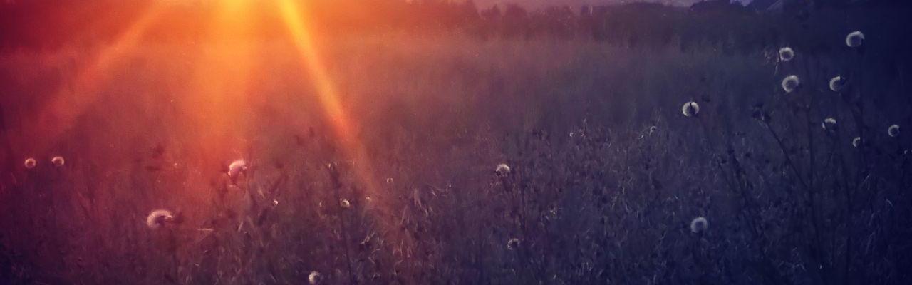 Reppe Søndre Gård solnedgang