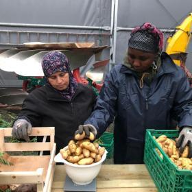 Dype Røtter grønnsakskasser