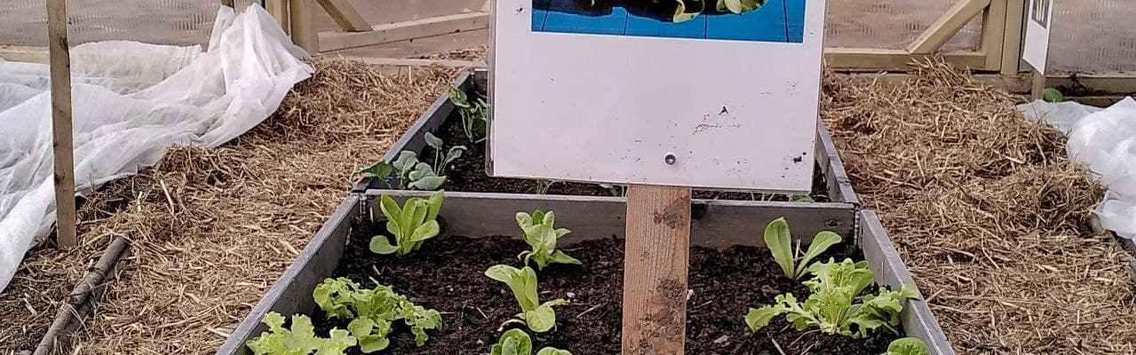 Dype Røtter salat