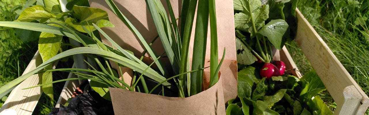 Dype Røtter grønnsakskasser i 2021