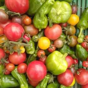 Dype Røtter grønnsakser