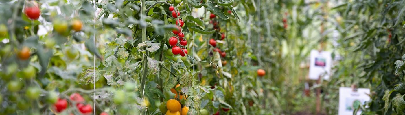 Dype Røtter grønnsaker og gårdsbutikk